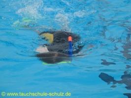 Training_Flipper 2_2010